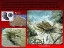 Серед безхребетних найбільшого розмаїття досягають рифотворні корали - табуля...