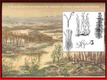 У ранньому девоні з ринієвих рослин виникають зостерові (навколоводні рослини)