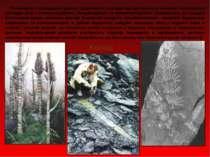 Починаючи з середнього девону трав'яниста псилофітова рослинність починає змі...