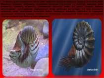 """У цілому девон вважається """"віком риб"""": водночас існували панцирні, хрящові та..."""