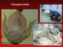 Панцирні риби