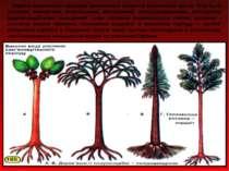 Карбон вважається періодом виключного розвитку рослинного життя. Ліси були ут...