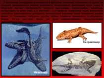 У морському середовищі розвиваються фузуліни, плечоногі, головоногі та акули;...