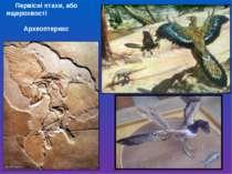 Первісні птахи, або ящерохвості Археоптерикс