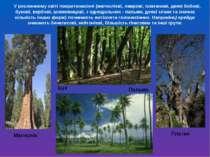 У рослинному світі покритонасінні (магнолієві, лаврові, платанові, деякі бобо...