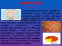 КРИПТОЗОЙ Рифей У рифеї (близько 1650 млн. років тому) відбулося кілька текто...