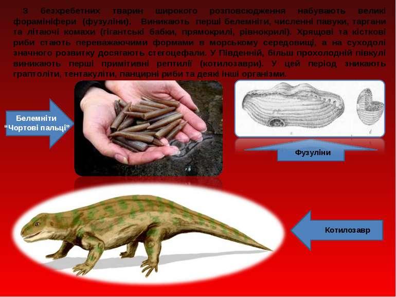 З безхребетних тварин широкого розповсюдження набувають великі форамініфери (...