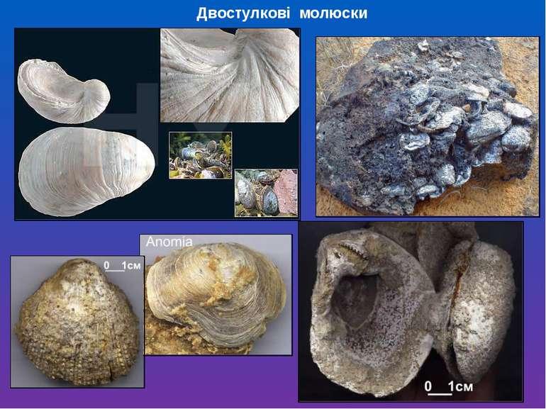 Двостулкові молюски
