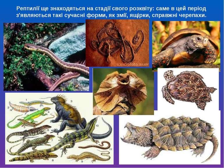 Рептилії ще знаходяться на стадії свого розквіту: саме в цей період з'являють...