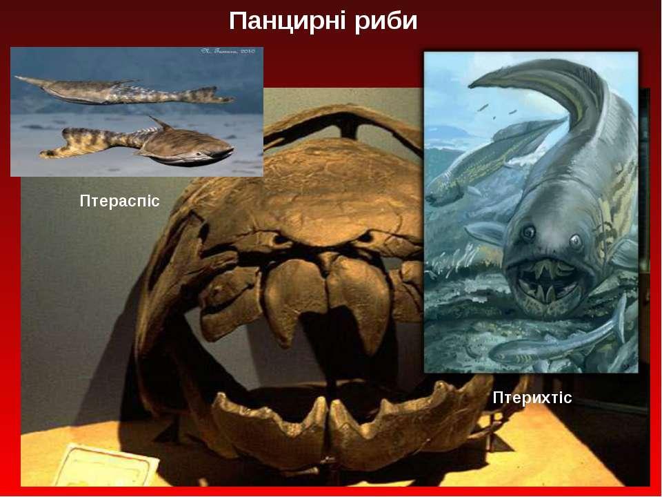 Панцирні риби Птераспіс Птерихтіс