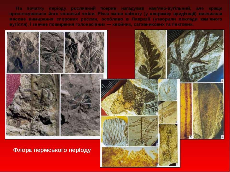 На початку періоду рослинний покрив нагадував кам'яно вугільний, але краще пр...