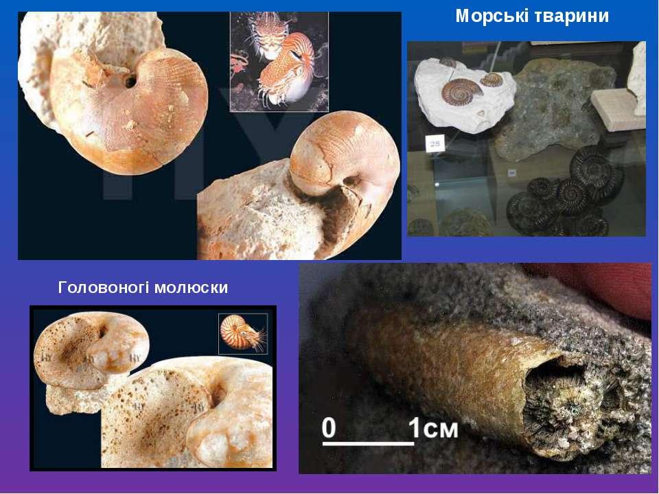 Морські тварини Головоногі молюски