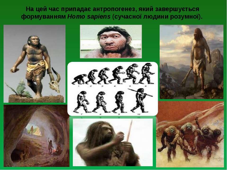 На цей час припадає антропогенез, який завершується формуванням Ноmо sаріеns ...
