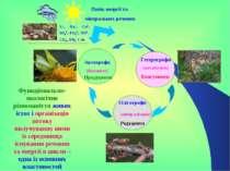 Потік енергії та мінеральних речовин Функціонально-екологічне різноманіття жи...