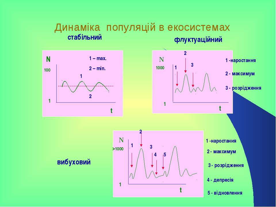 Динаміка популяцій в екосистемах стабільний вибуховий N N N флуктуаційний t t...