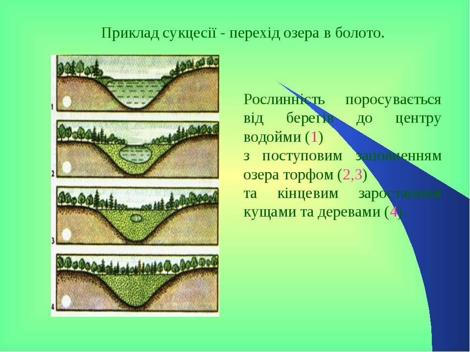 Приклад сукцесії - перехід озера в болото. Рослинність поросувається від бере...