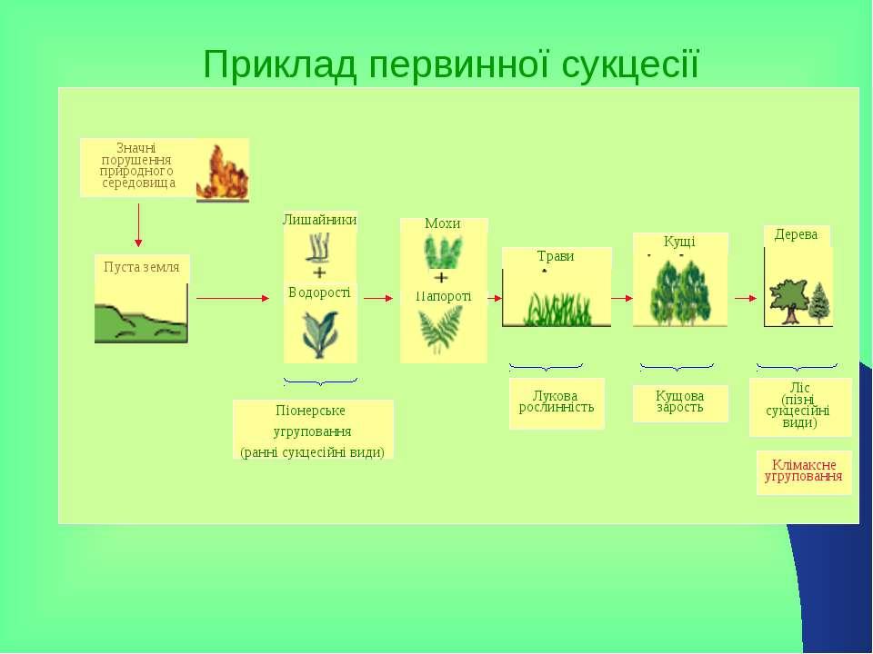 Приклад первинної сукцесії Значні порушення природного середовища Пуста земля...