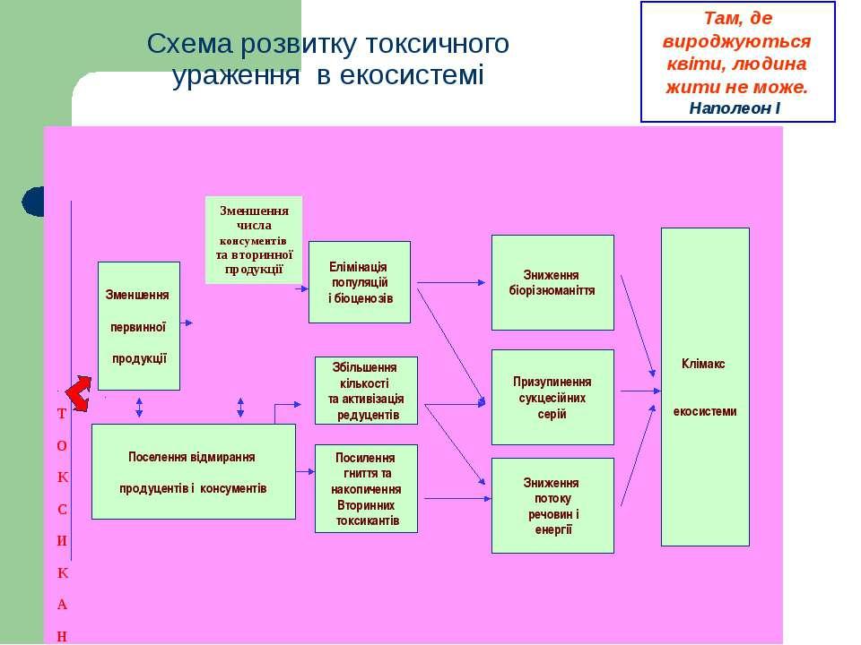 Схема розвитку токсичного ураження в екосистемі Зменшення первинної продукції...