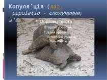Копуля ція (лат. copulatio- сполучення; з'єднання)