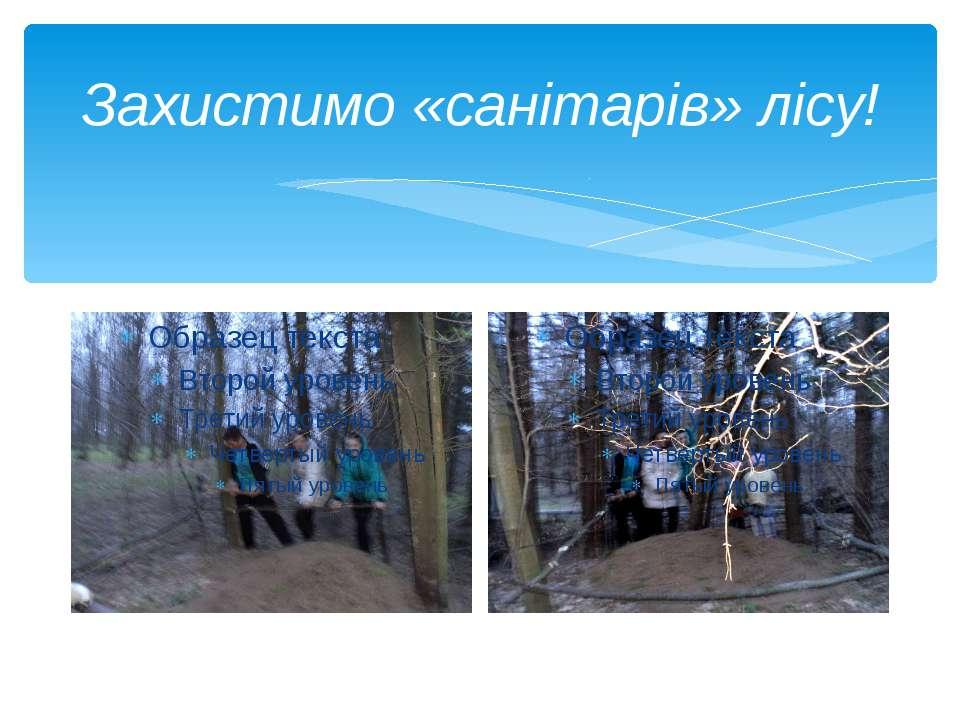 Захистимо «санітарів» лісу!