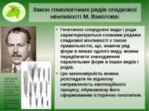 Закон гомологічних рядів спадкової мінливості М. Вавілова: Генетично спорідне...