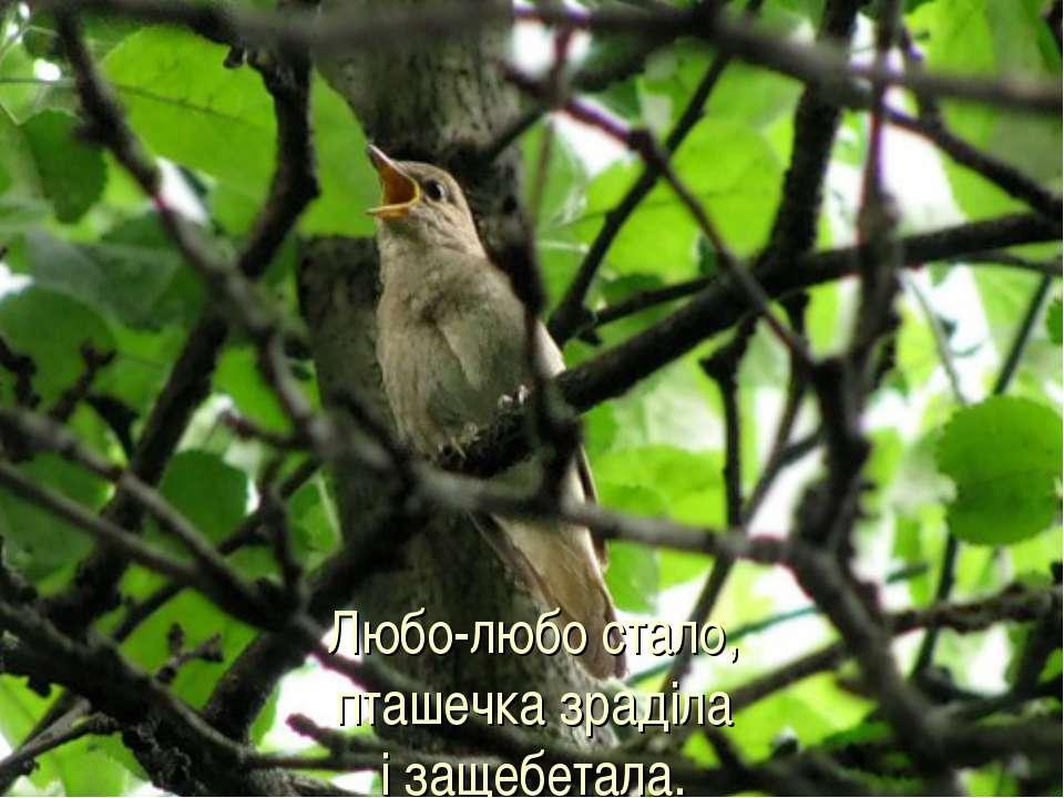Любо-любо стало, пташечка зраділа і защебетала.