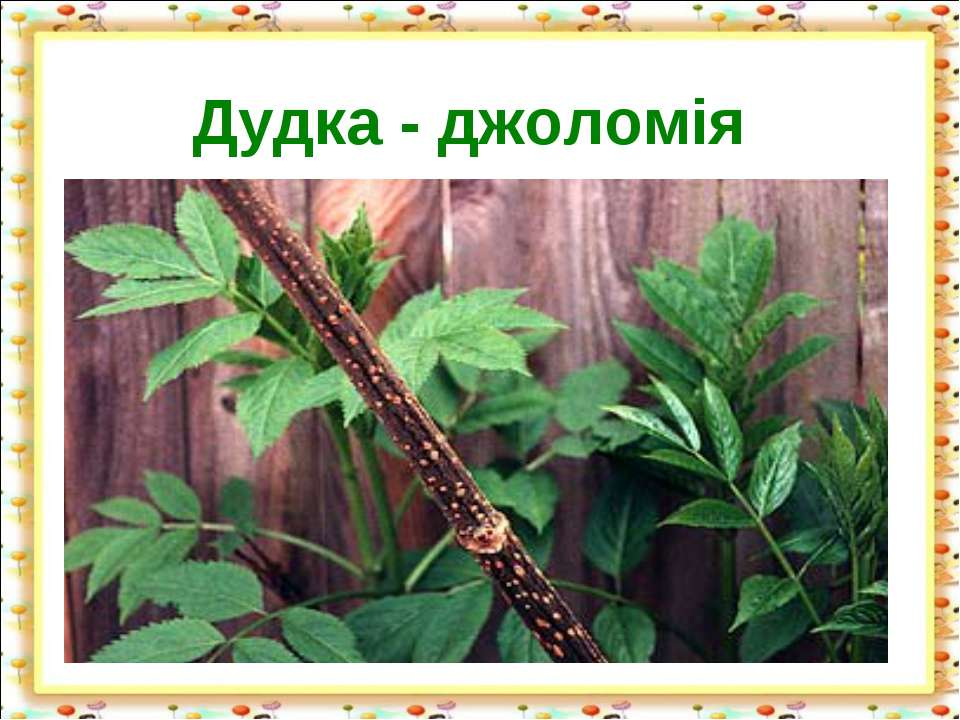 Дудка - джоломія http://aida.ucoz.ru