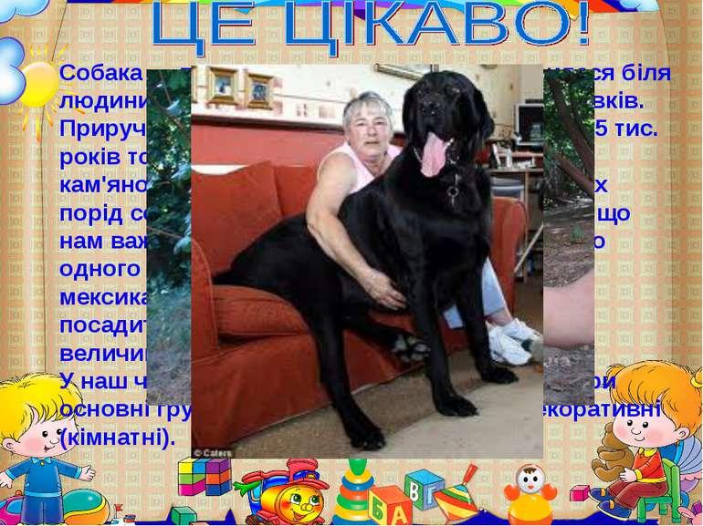 Собака — перша домашня істота, яка з'явилася біля людини. Предками собаки бул...