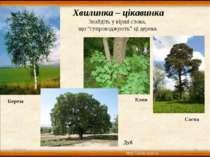 """* * Хвилинка – цікавинка Знайдіть у вірші слова, що """"супроводжують"""" ці дерева..."""