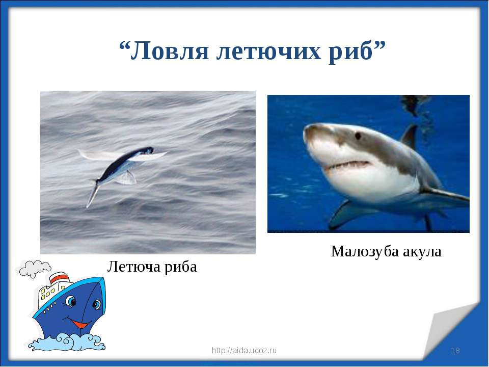"* * http://aida.ucoz.ru ""Ловля летючих риб"" Летюча риба Малозуба акула http:/..."