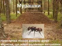 Мурашник Невеличка лісова комаха, дуже корисна, що живе великими колоніями в ...
