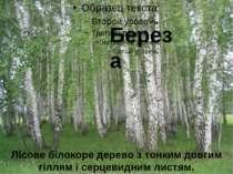 Береза Лісове білокоре дерево з тонким довгим гіллям і серцевидним листям.