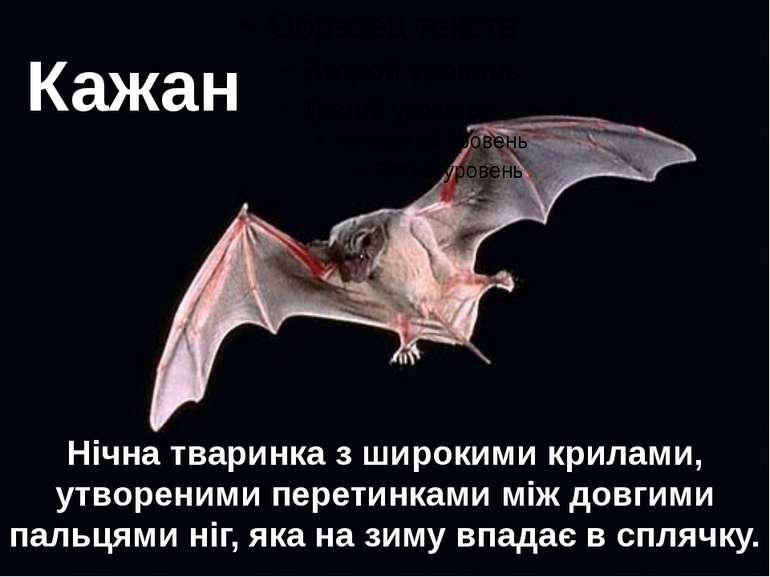 Кажан Нічна тваринка з широкими крилами, утвореними перетинками між довгими п...