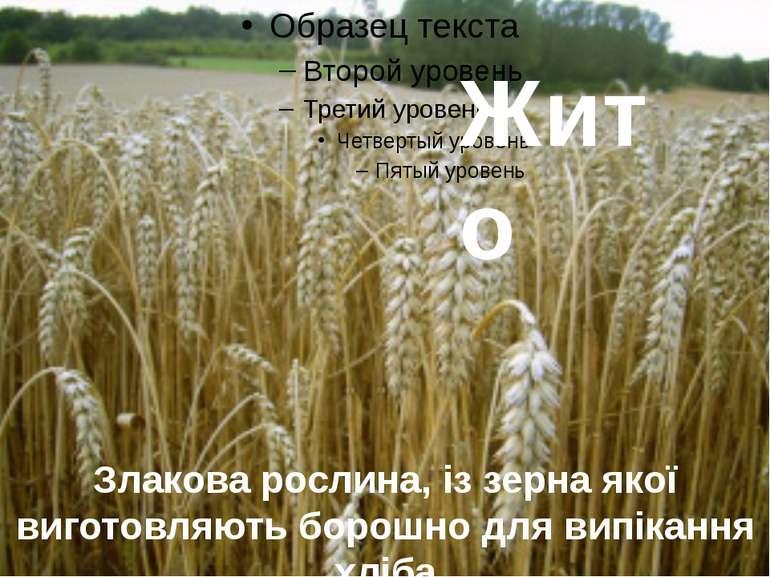 Жито Злакова рослина, із зерна якої виготовляють борошно для випікання хліба