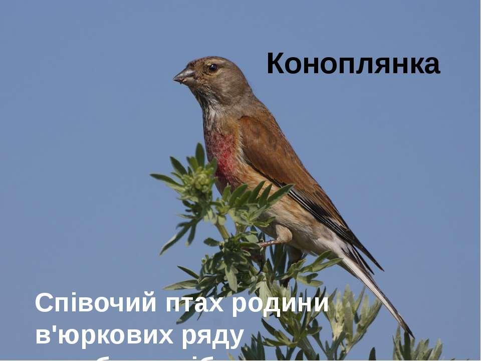 Коноплянка Співочий птах родини в'юркових ряду горобцеподібних.
