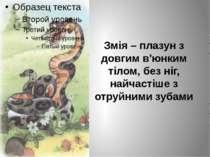 Змія – плазун з довгим в'юнким тілом, без ніг, найчастіше з отруйними зубами
