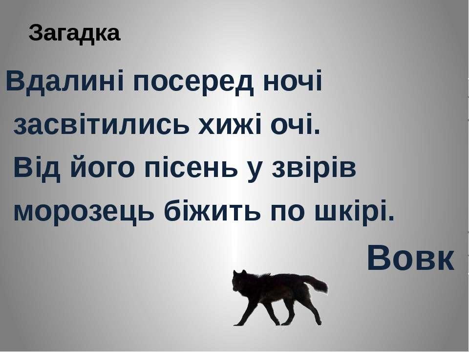 Загадка Вдалині посеред ночі засвітились хижі очі. Від його пісень у звірів м...