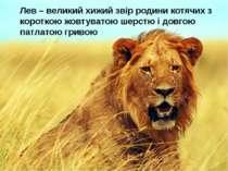 Лев – великий хижий звір родини котячих з короткою жовтуватою шерстю і довгою...