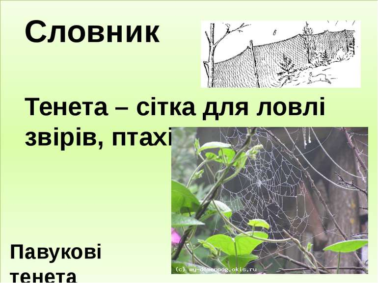 Словник Тенета – сітка для ловлі звірів, птахів. Павукові тенета