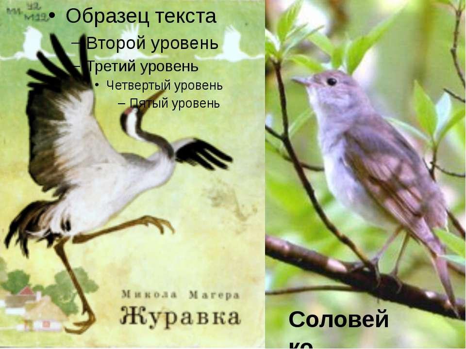 Соловейко