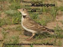Жайворонок Польова чи степова пташка; жайвір, жайворон