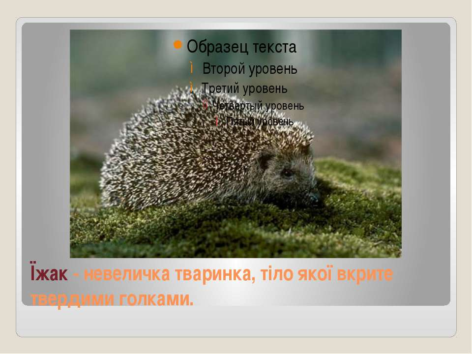 Їжак - невеличка тваринка, тіло якої вкрите твердими голками.