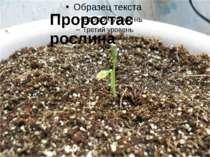 Проростає рослина