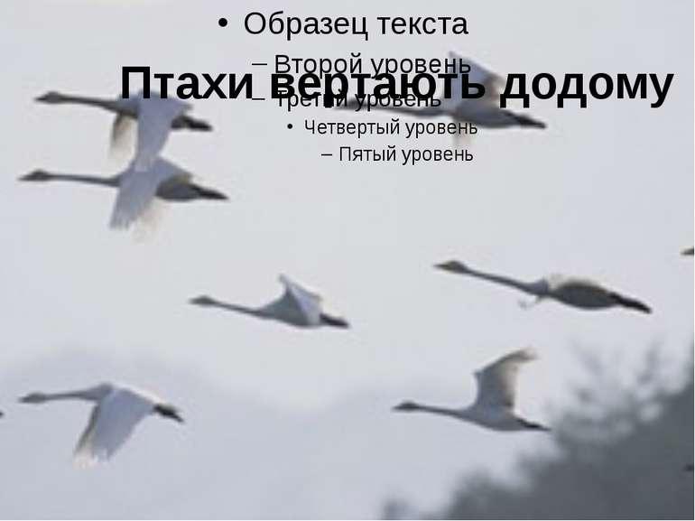 Птахи вертають додому