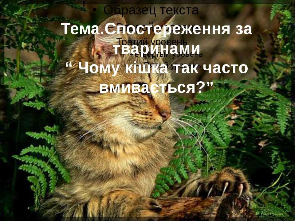 """Тема.Спостереження за тваринами """" Чому кішка так часто вмивається?"""""""