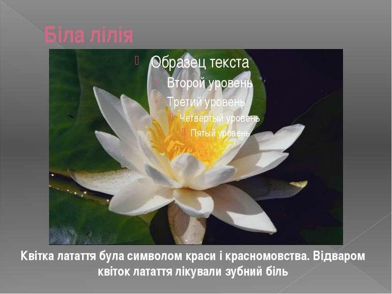 Біла лілія Квітка латаття була символом краси і красномовства. Відваром квіто...