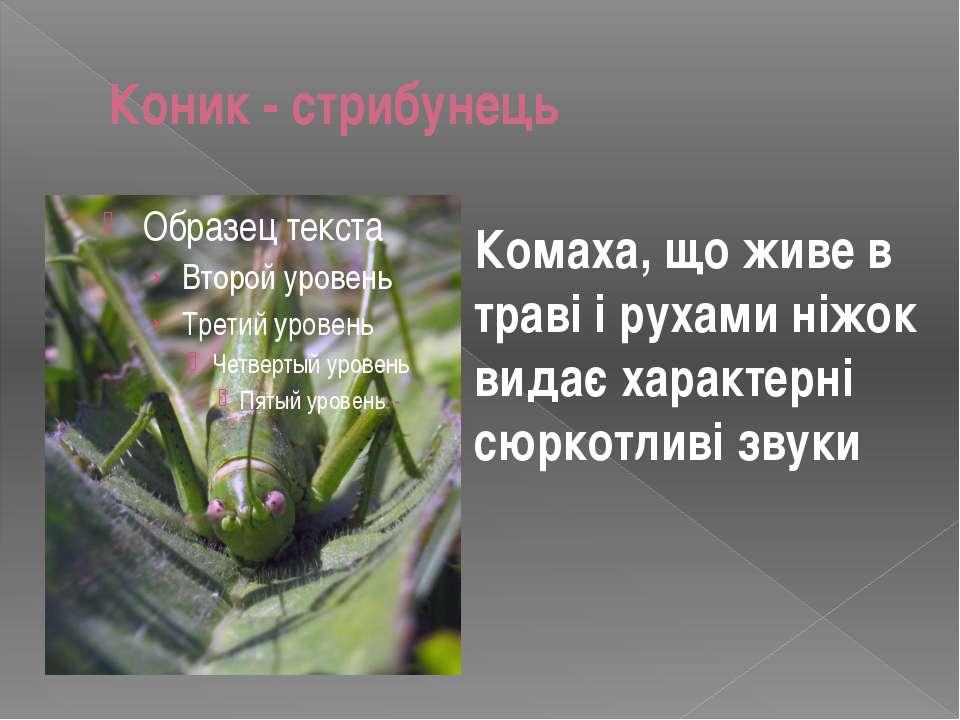Коник - стрибунець Комаха, що живе в траві і рухами ніжок видає характерні сю...
