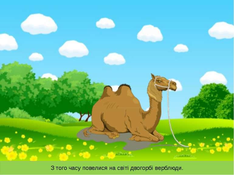 З того часу повелися на світі двогорбі верблюди.
