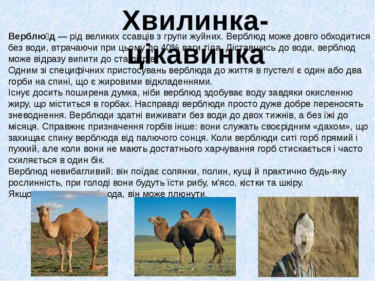 Верблю д— рід великихссавцівз групижуйних. Верблюд може довго обходитися ...