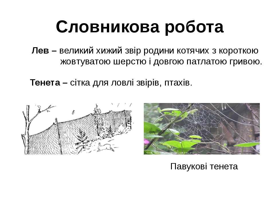 Словникова робота Лев – великий хижий звір родини котячих з короткою жовтуват...